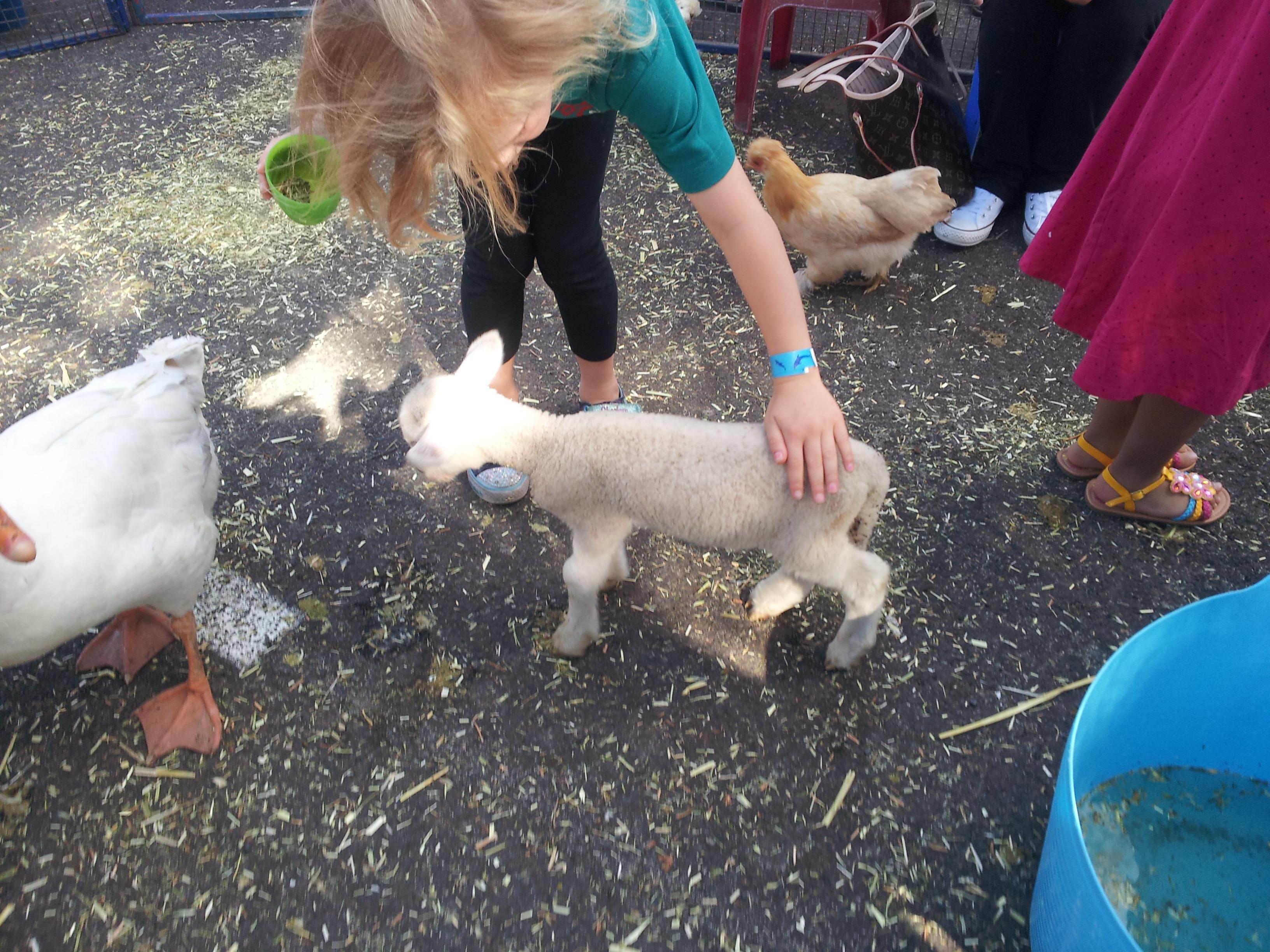 one happy lamb